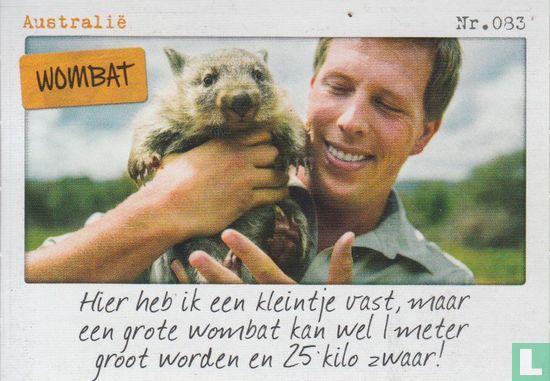 Albert Heijn - Australië - Wombat