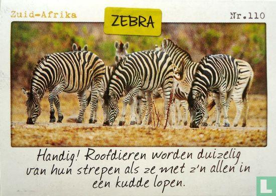 Albert Heijn - Zuid-Afrika - Zebra