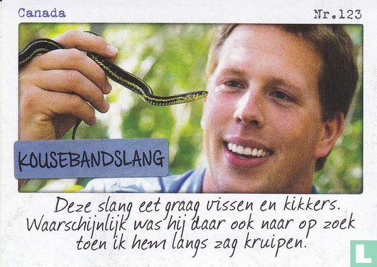 Albert Heijn - Canada - Kousebandslang