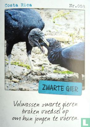 Albert Heijn - Costa Rica - Zwarte gier