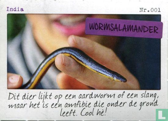 Albert Heijn - India - Wormsalamander