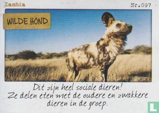 Albert Heijn - Zambia - Wilde hond