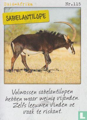 Albert Heijn - Zuid-Afrika - Sabelantilope