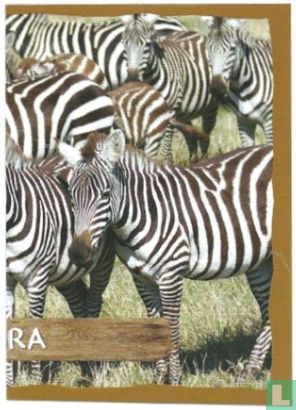 Emté - Zebra [rechterkant]