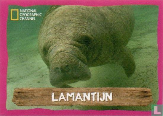 Emté - Lamantijn