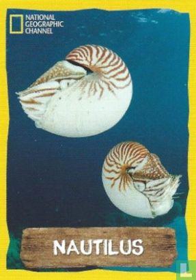 Emté - Nautilus