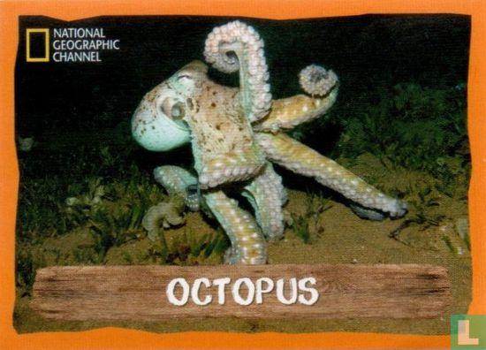 Emté - Octopus