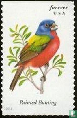United States of America (USA) - songbirds