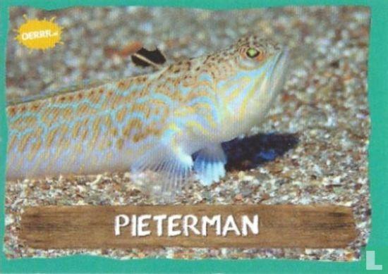 Emté - Pieterman