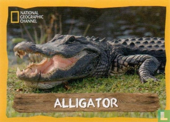 Emté - Alligator
