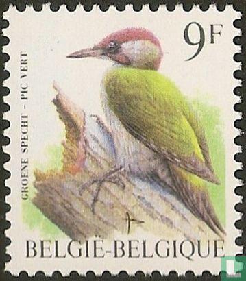 Belgien [BEL] - Grünspecht