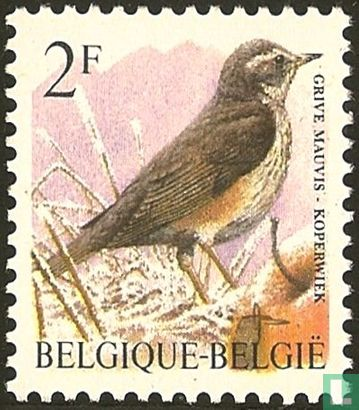 Belgique [BEL] - Grive mauvis