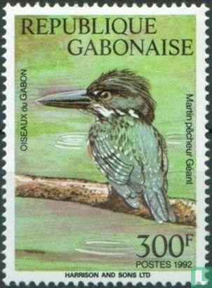 Gabon - Vogels