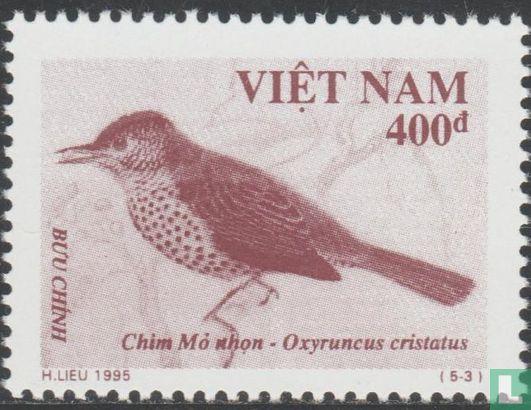 Vietnam - Vogels