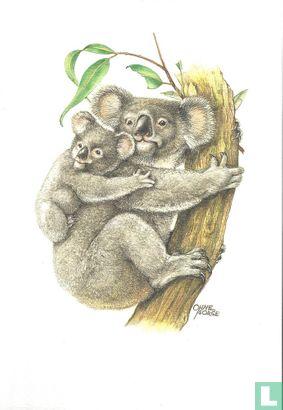 Zoogdieren - Koala