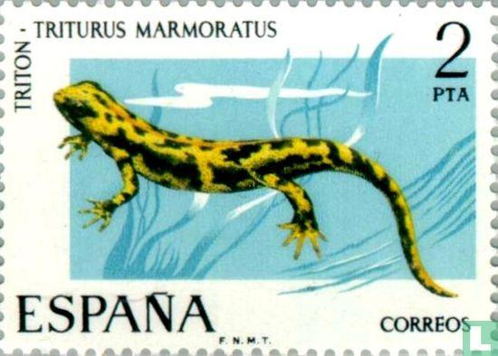 Spanien [ESP] - Marmormolch