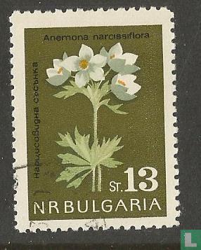 Bulgarien [BGR] - Blumen