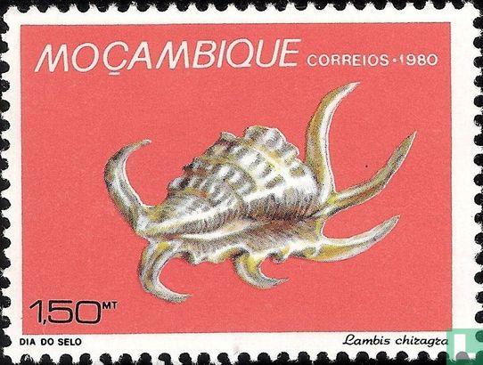 Mozambique - Shells