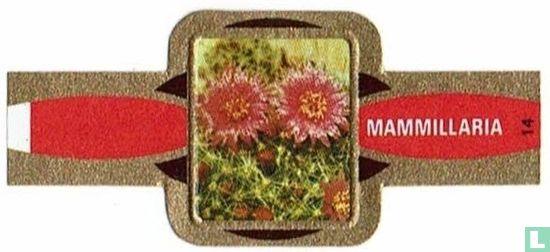 Taf - Mammillaria