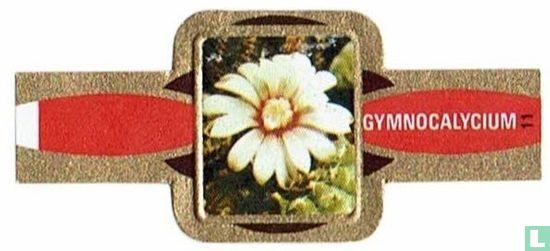 Taf - Gymnocalycium