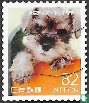 Japon [JPN] - Animaux I - chiens