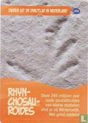 Albert Heijn - Rhynchosauroides