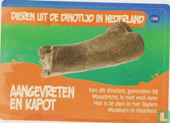 Albert Heijn - Aangevreten en kapot