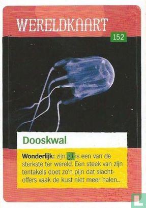 Albert Heijn - Dooskwal