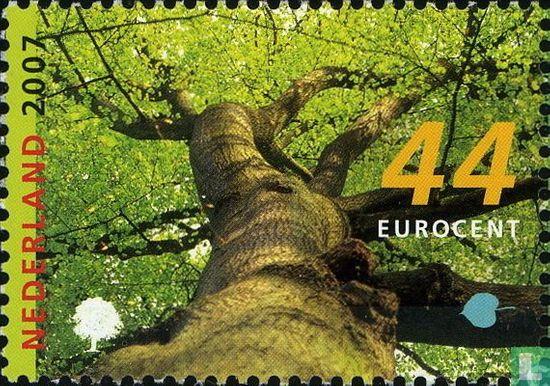 Pays-Bas [NLD] - Les arbres au printemps