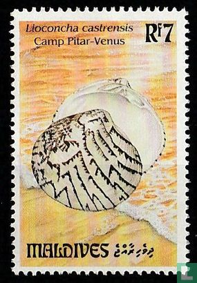 Maldives - Shells
