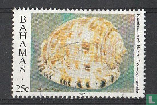 Bahamas [BHS] - Shells