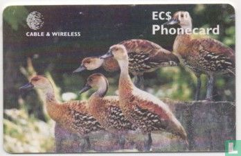 Cable & Wireless - West Indian Tree Ducks