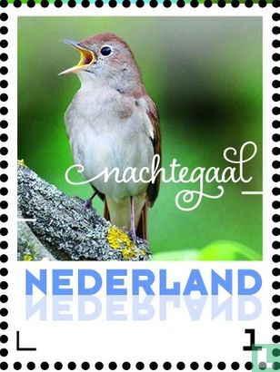 Netherlands [NLD] - Summer Birds - Nightingale