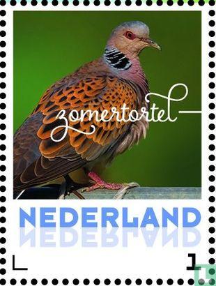 Netherlands [NLD] - Summer birds - Turtle Dove