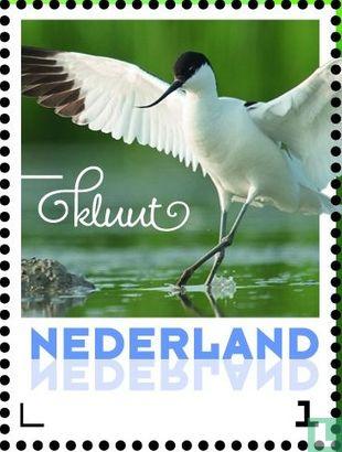 Netherlands [NLD] - Summer birds - Avocet