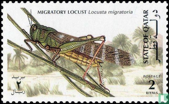 Einheimische Insekten