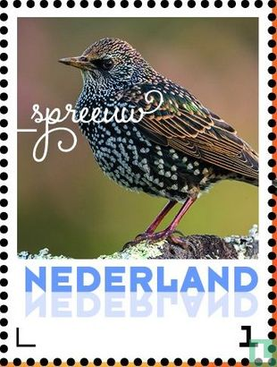 Netherlands [NLD] - Autumn birds - Starling