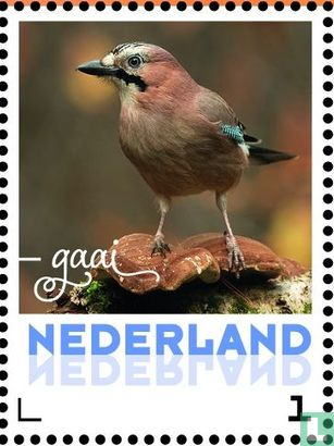 Netherlands [NLD] - Autumn birds - Jay