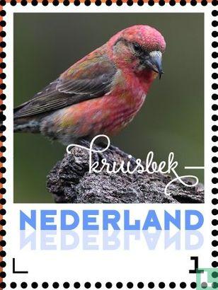 Netherlands [NLD] - Autumn birds - Crossbones