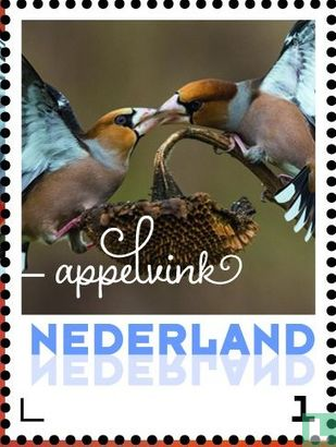 Netherlands [NLD] - Autumn birds - Hawfinch