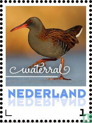 Netherlands [NLD] - Winter Birds - Water Rail
