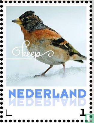 Netherlands [NLD] - Winter Birds - Brambling