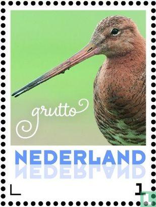 Nederland [NLD] - Lentevogels - Grutto