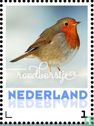 Netherlands [NLD] - Winter Birds - Robin