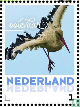 Nederland [NLD] - Lentevogels - Ooievaar