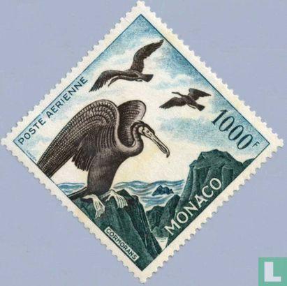 Monaco - Great Cormorants