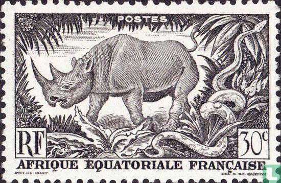 French Equatorial Africa - Rhinoceros