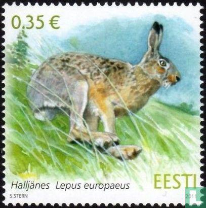 Estland - Haas