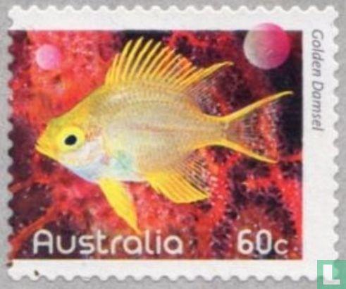 Australien [AUS] - Fische