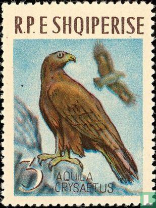 Albanie [ALB] - Aigle royal